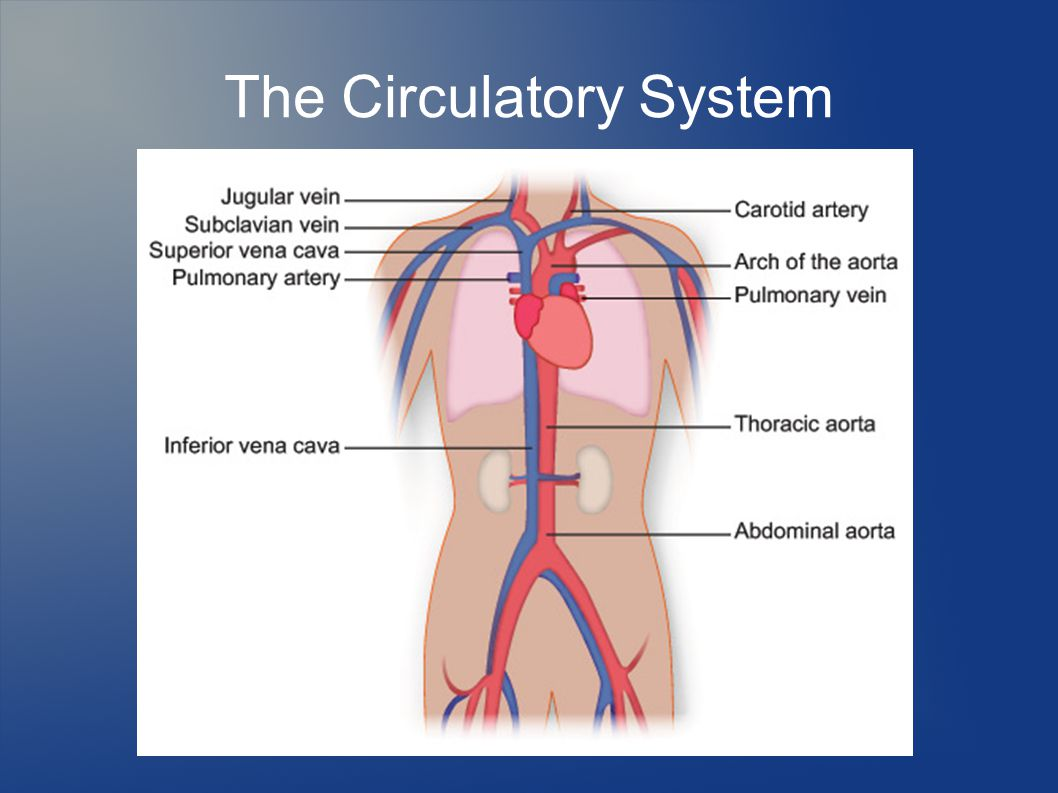 What is a circulatory disorder
