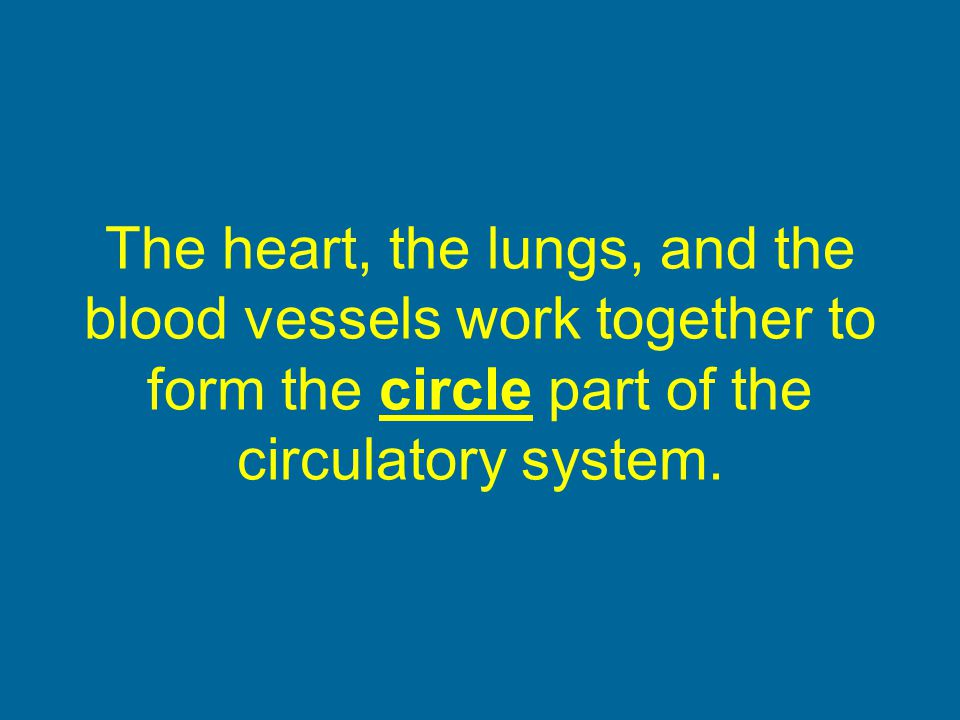 The heart, the lungs, and the blood vessels work together to form the circle part of the circulatory system.