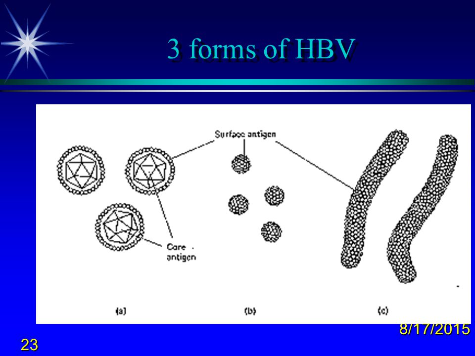 3 forms of HBV