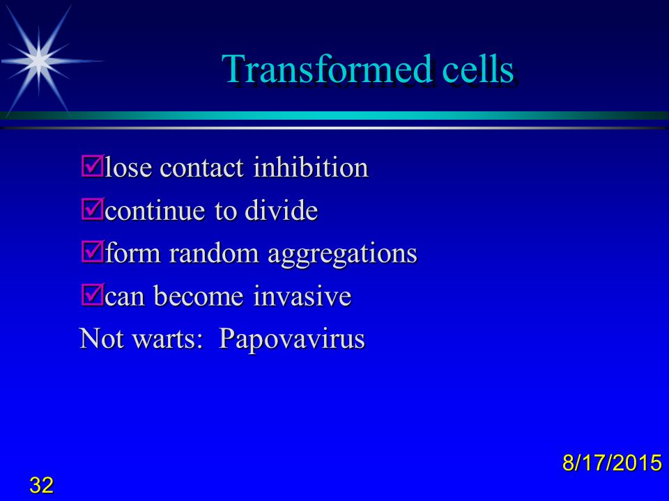 Transformed cells lose contact inhibition continue to divide