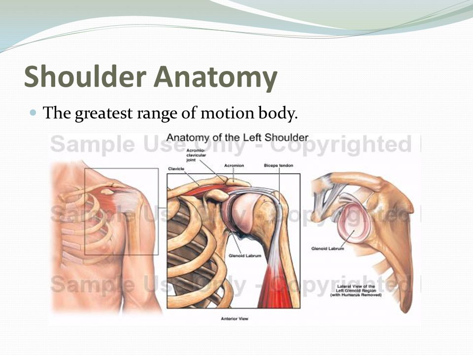Common Shoulder Disorders - ppt video online download