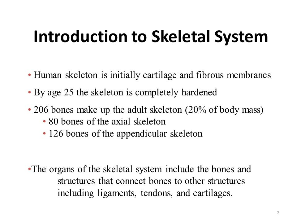 Anatomy & Physiology Chapter 7: Skeletal System - ppt video online ...