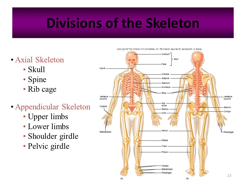 Johnw Hole Jr Human Anatomy And Physiology Diagrams - Auto ...