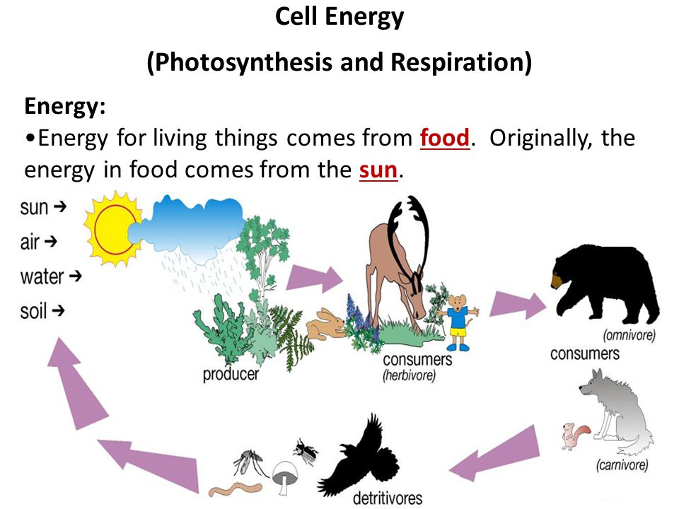 Photosynthesis respiration diagram auto electrical wiring diagram photosynthesis respiration ppt download rh slideplayer com photosynthesis cellular respiration diagram photosynthesis cellular respiration diagram ccuart Image collections