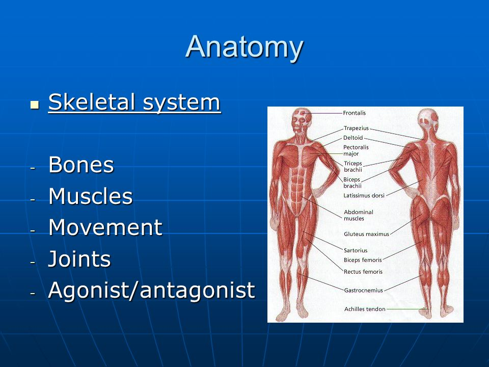 2.2 Anatomy and Biomechanics - ppt video online download