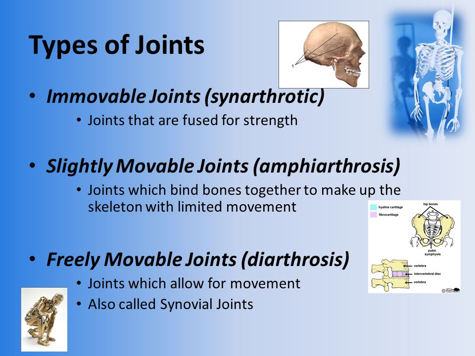 Bones, Muscles, Joints and Movement - ppt video online ... Hinge Joint Knee