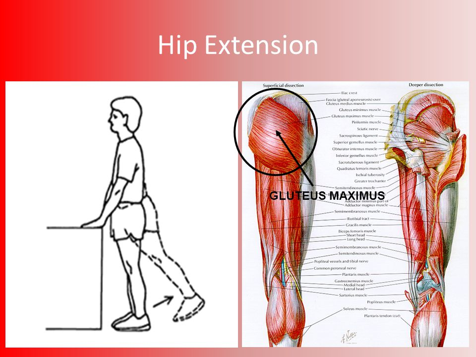 Bones, Muscles, Joints and Movement - ppt video online download