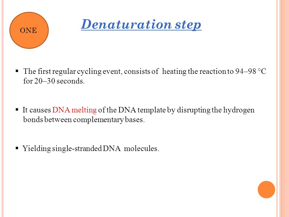 It causes DNA melting of the DNA template by disrupting the hydrogen