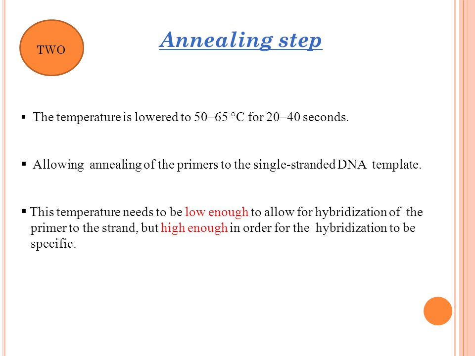 Allowing annealing of the primers to the single-stranded DNA template.
