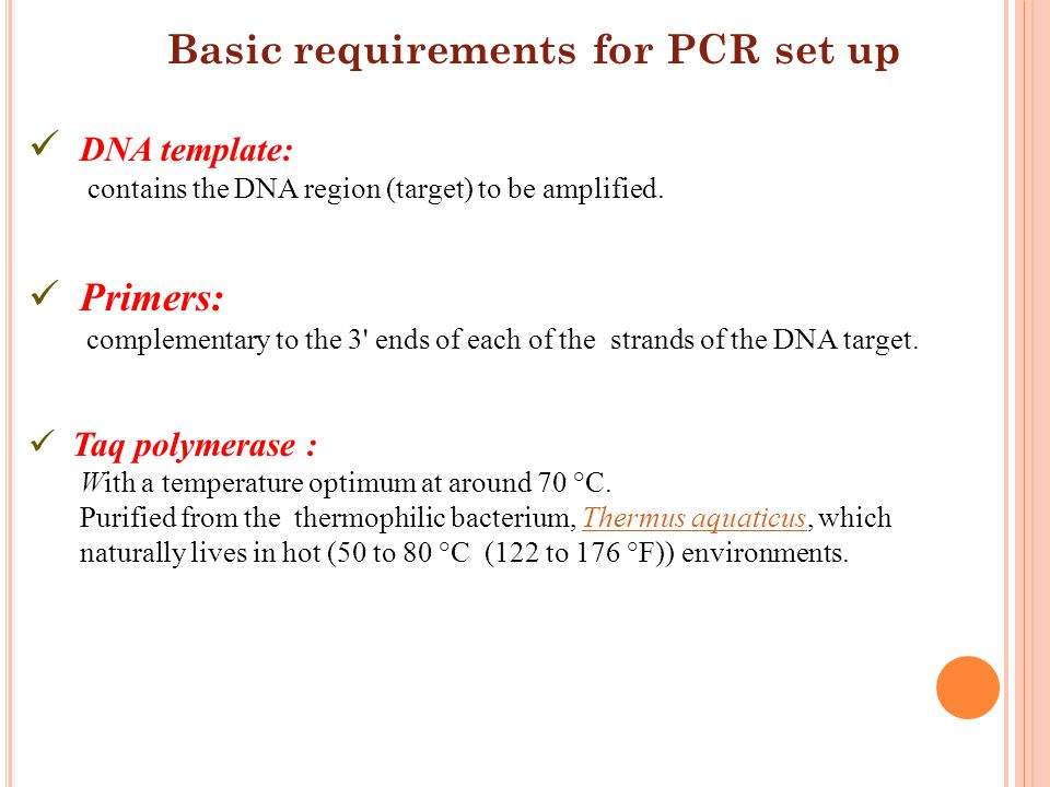 DNA template: Primers: Taq polymerase :