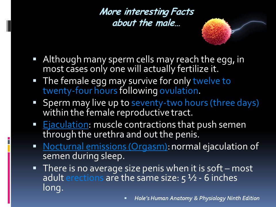 Reproductive system interesting facts