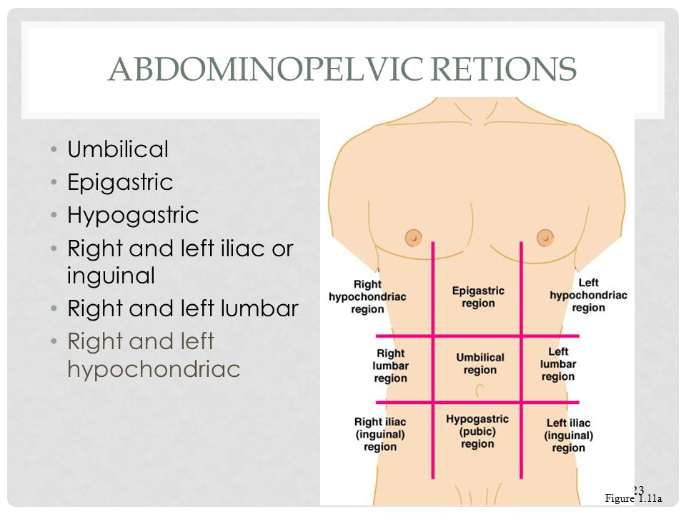 Abdominopelvic Retions