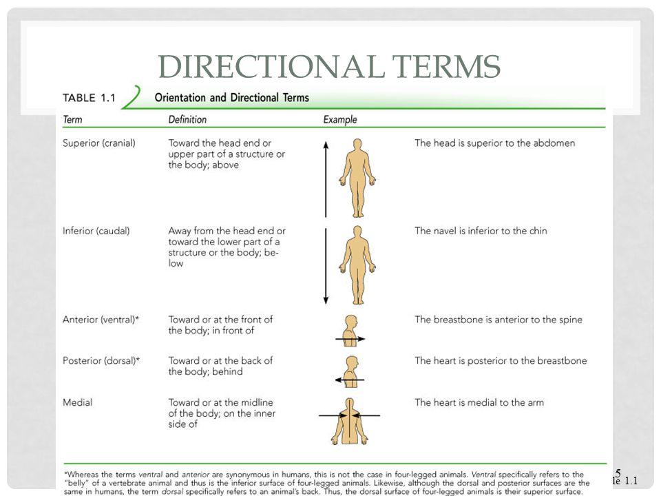 Directionalregional Terminology Ppt Video Online Download