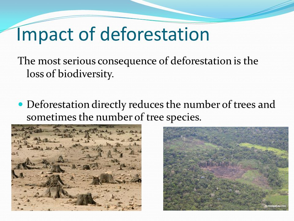 Impact of deforestation