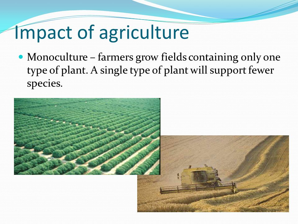 Impact of agriculture Monoculture – farmers grow fields containing only one type of plant.
