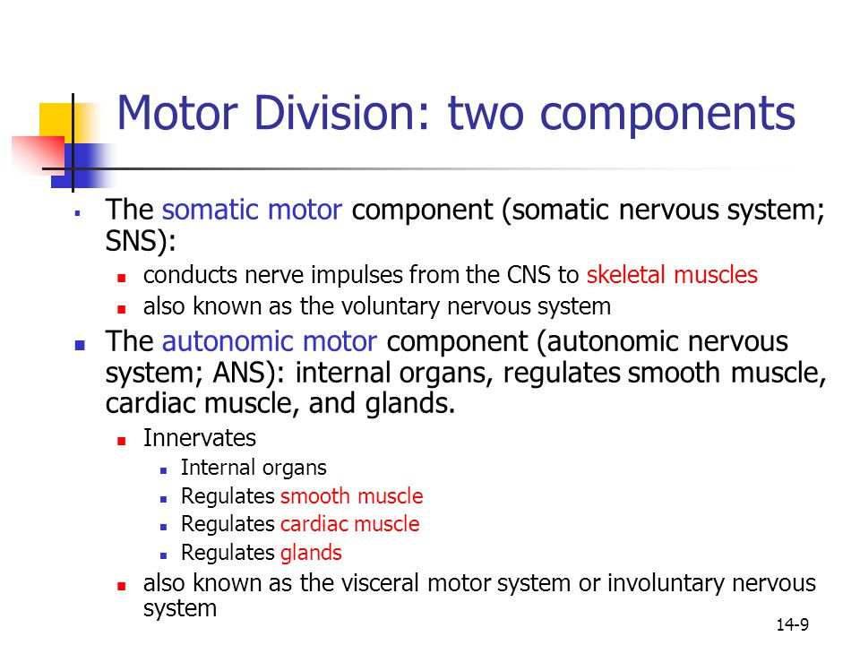 Somatic Motor Division Nervous System Ppt Video Online