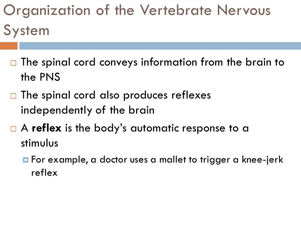organization of the nervous system pdf
