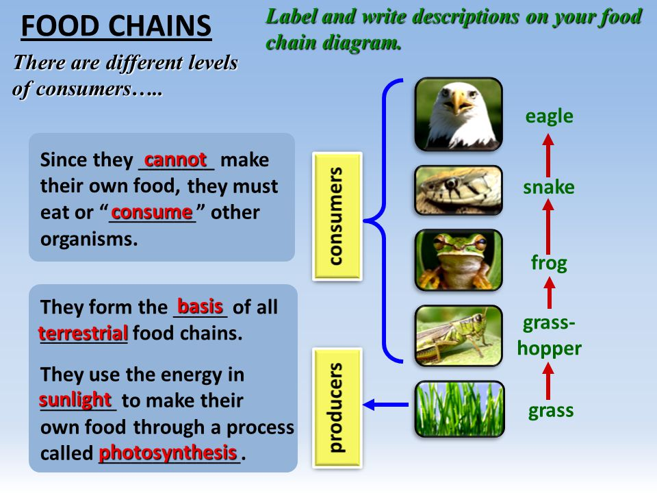 Food Chains Trophic Levels Ecological Pyramids Ppt Video Online