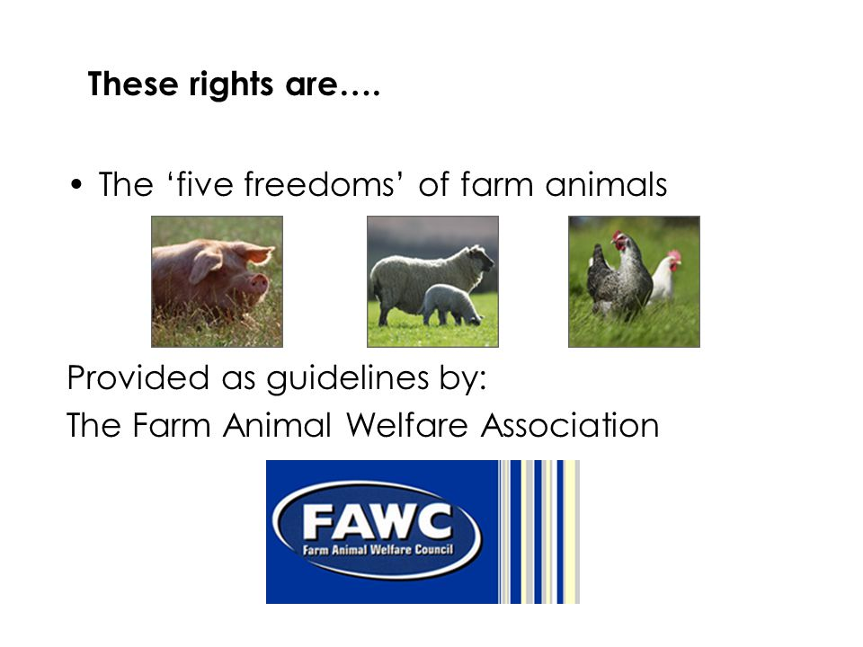 These rights are…. The 'five freedoms' of farm animals.