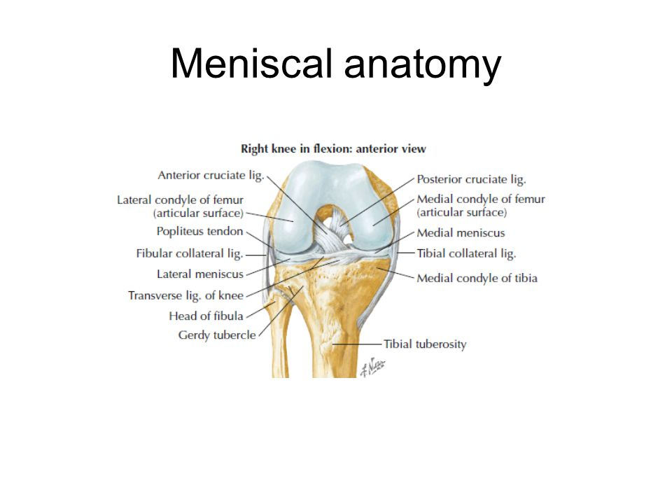 Knee Injuries Idan Ilsar Md Arthroscopy And Sport Injury Unit Ppt