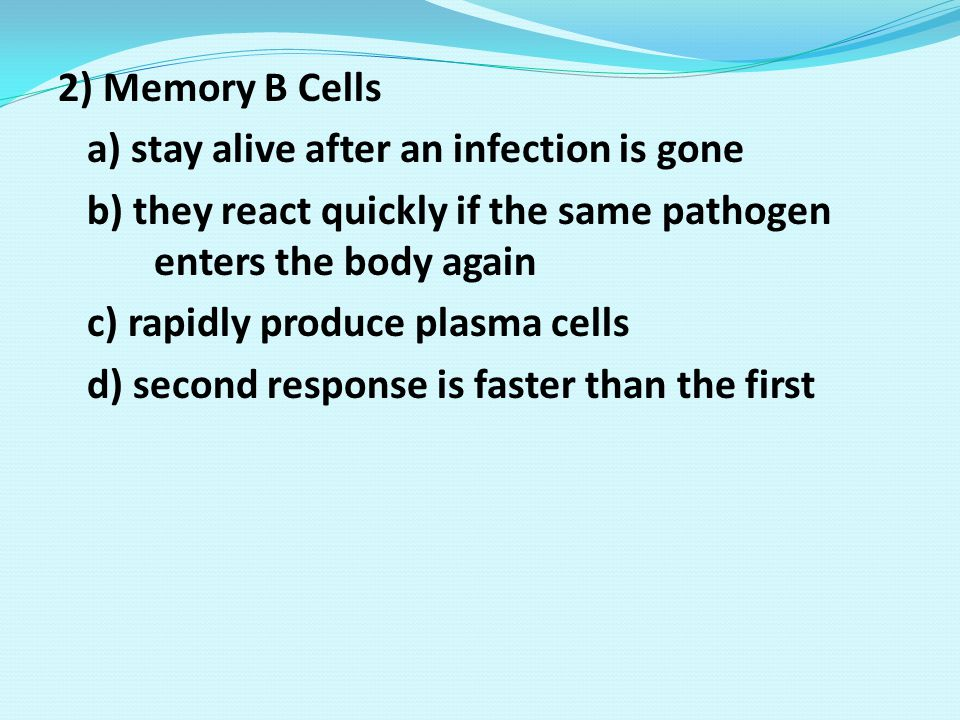2) Memory B Cells a) stay alive after an infection is gone. b) they react quickly if the same pathogen enters the body again.