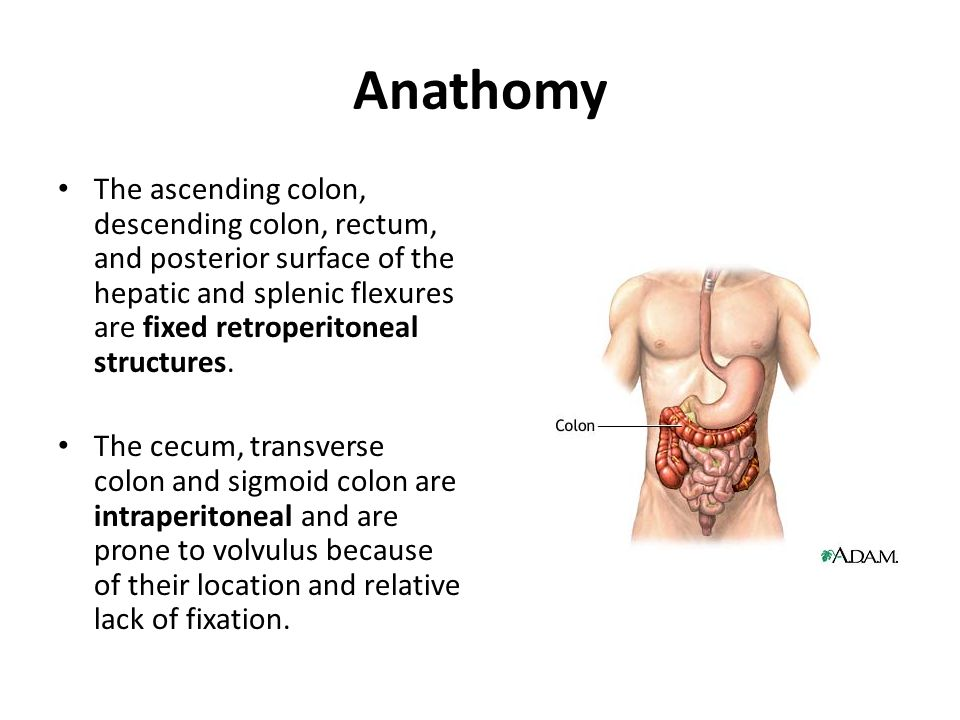 Everybody Loves Sanofis Giant Human Colon Ppt Download