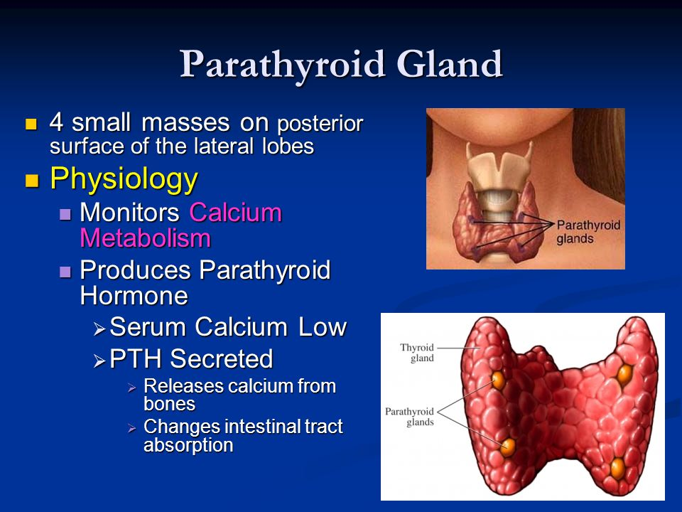 Lujoso Anatomy And Physiology Of Parathyroid Gland Ppt Motivo ...