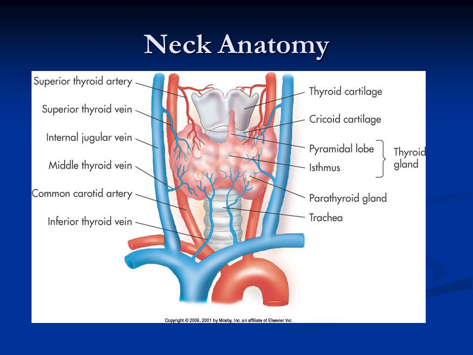 thyroid  parathyroid  and neck