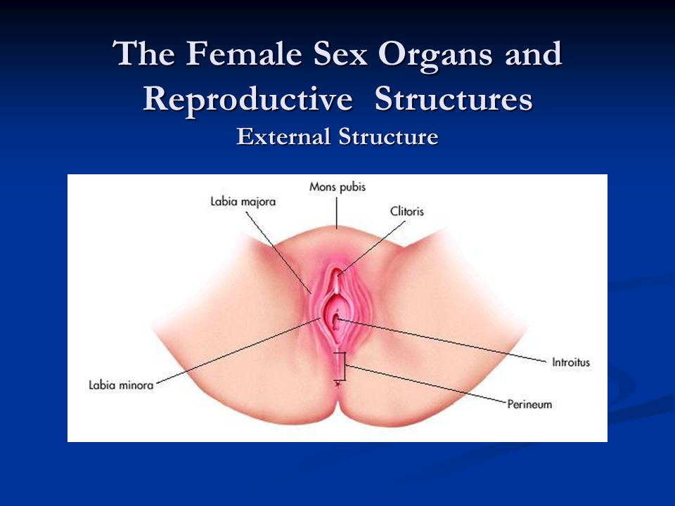 Structure of reproductive organs