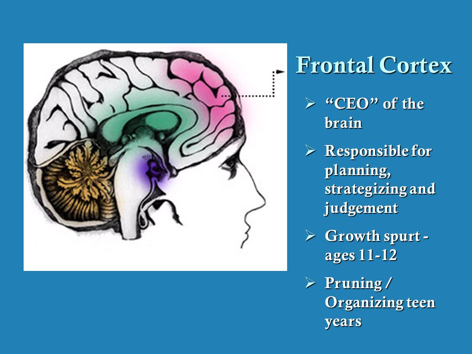The Adolescent Brain Why Executive >> The Teen Brain A Work In Progress Ppt Download