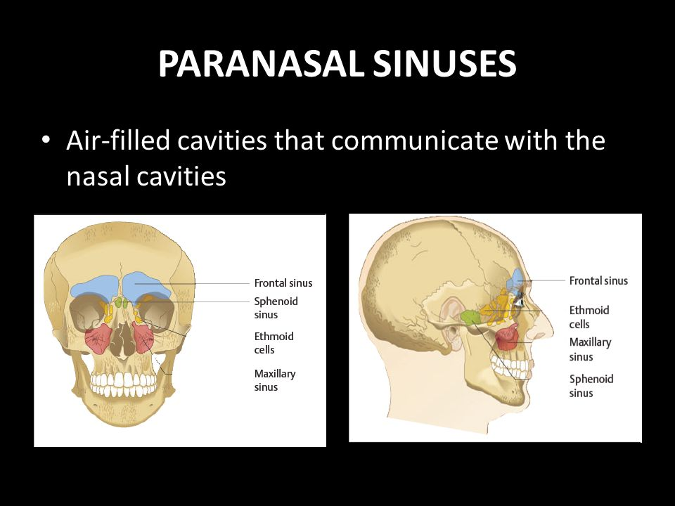 PARANASAL SINUSES Anatomy, Physiology and Diseases - ppt video ...