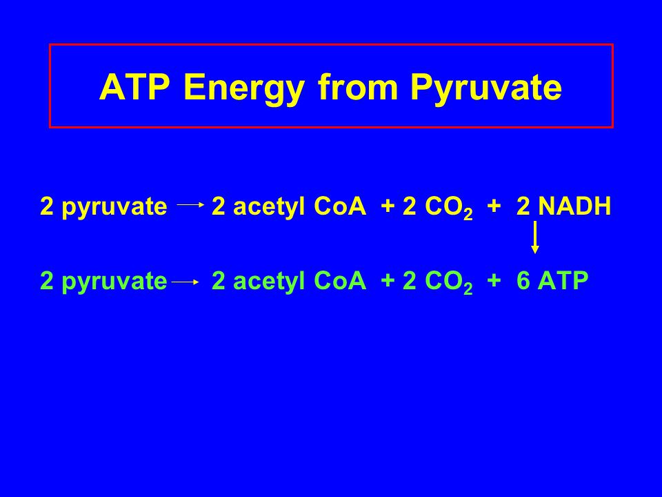 ATP Energy from Pyruvate
