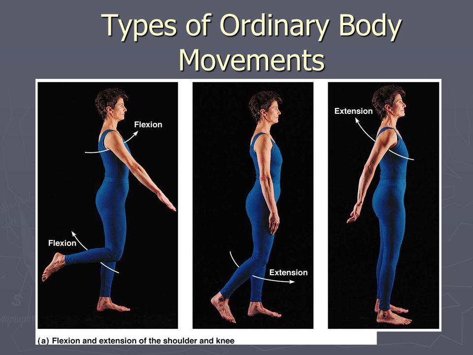 Body Movements. - ppt download Hinge Joint Knee