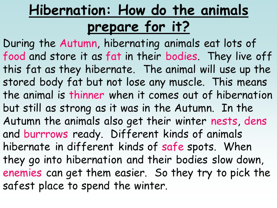 Hibernation: How do the animals prepare for it