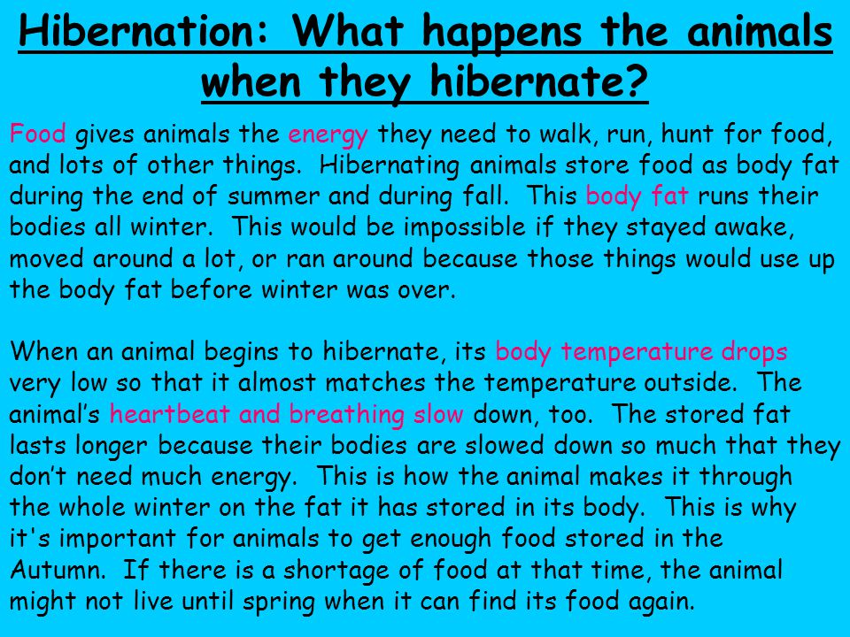 Hibernation: What happens the animals when they hibernate
