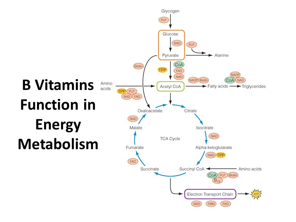 Water Soluble Vitamins Ppt Video Online Download