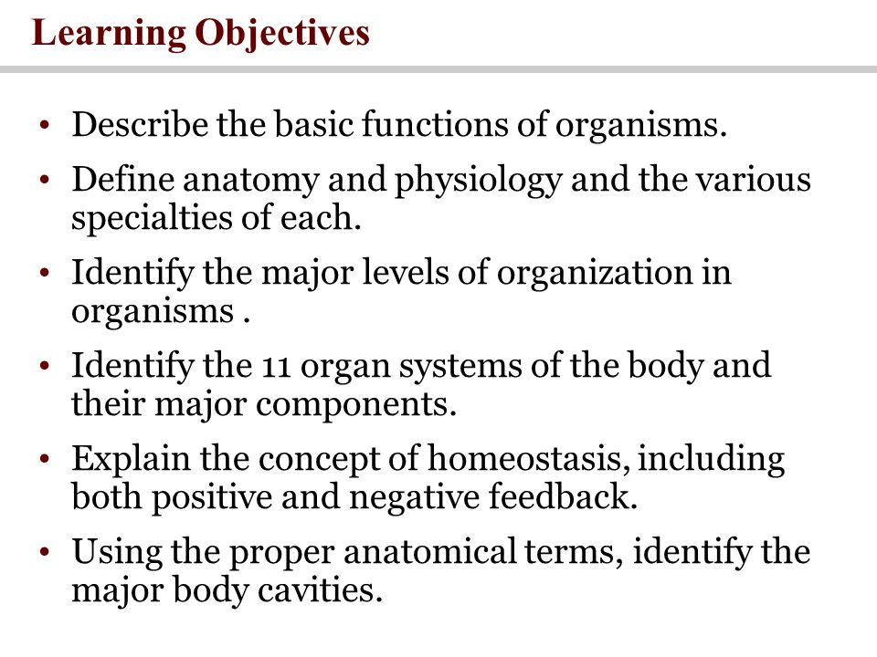 Fine Anatomy And Physiology Learning Objectives Gallery - Human ...