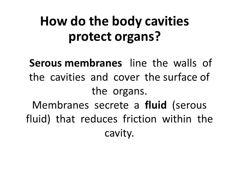 How do the body cavities protect organs