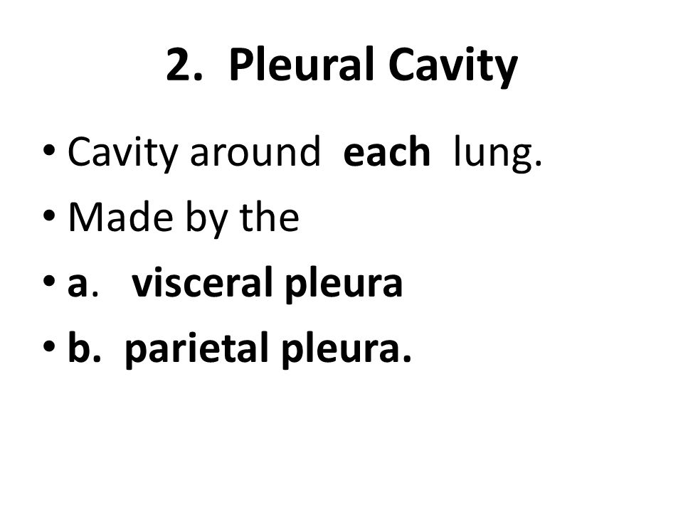 2. Pleural Cavity Cavity around each lung. Made by the