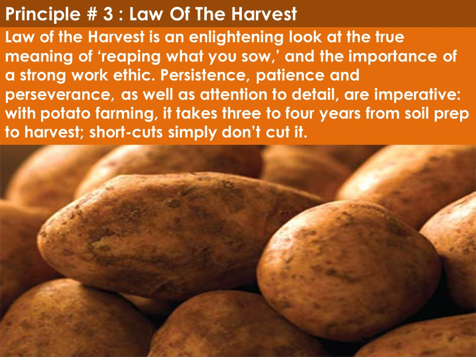 Principle # 3 : Law Of The Harvest