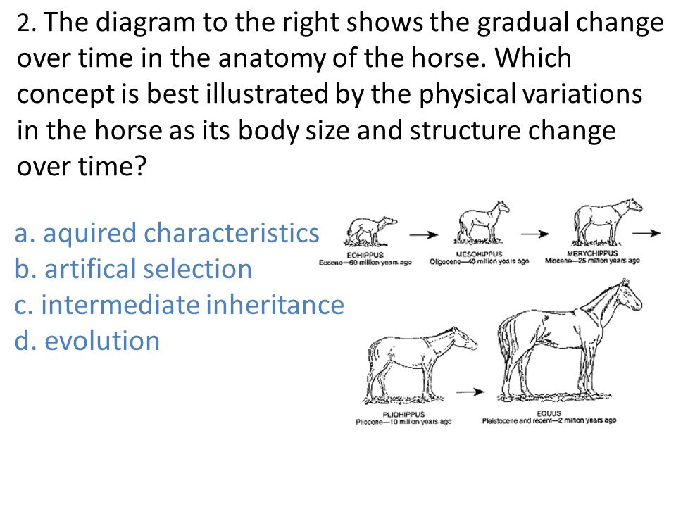 Evolution quiz wiz ppt video online download the diagram to the right shows the gradual change over time in the anatomy ccuart Gallery