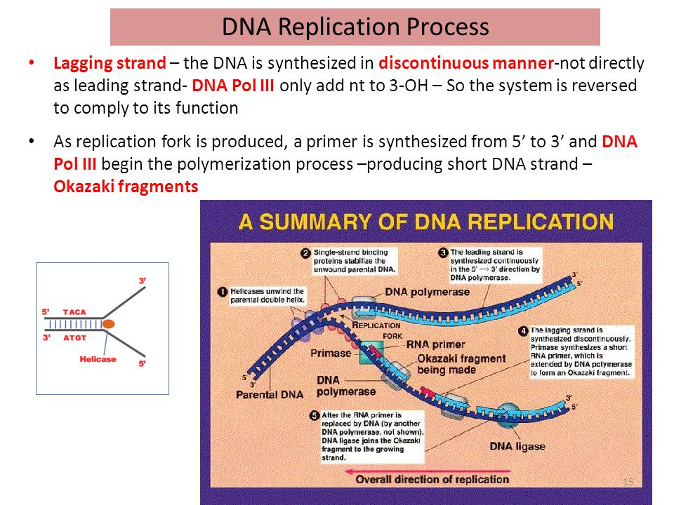 Replication Of Dna Ppt Video Online Download