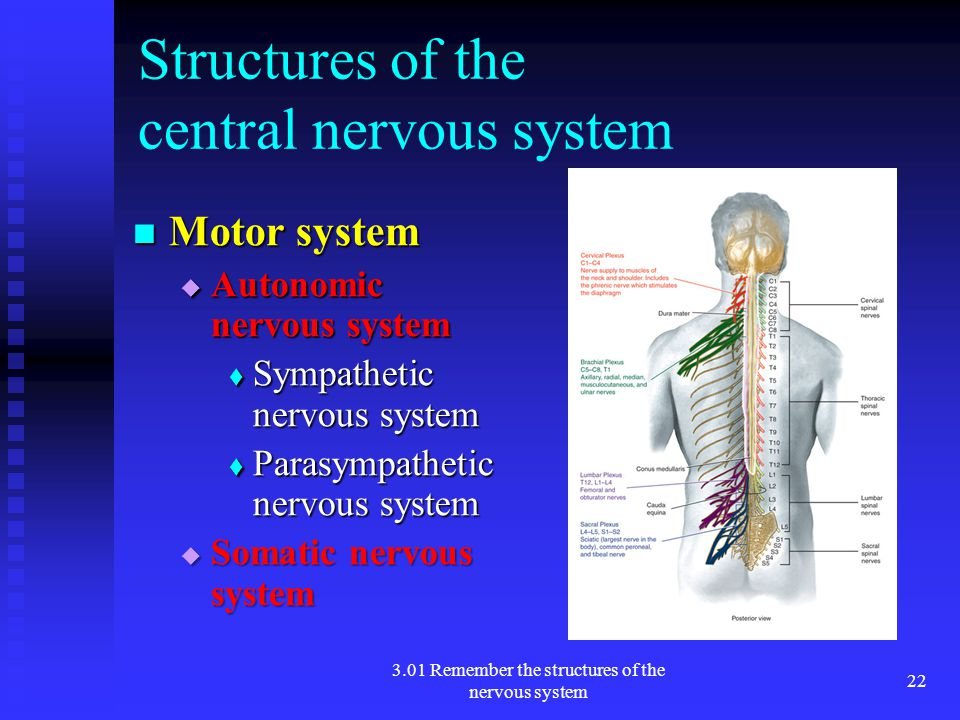 Structures of the central nervous system