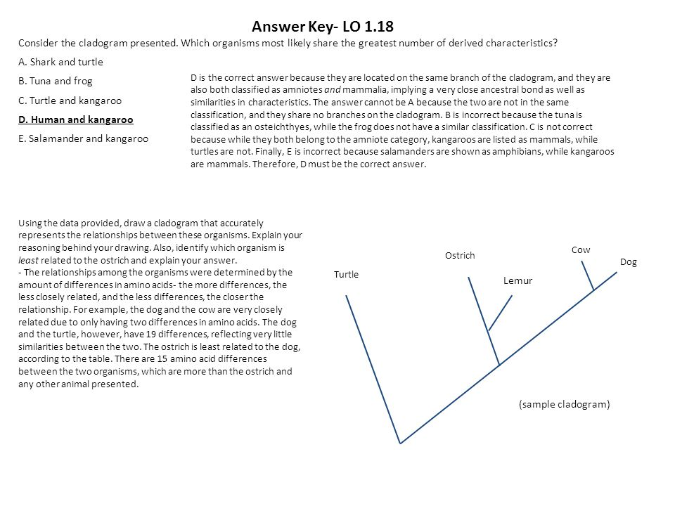 Making Cladograms Worksheet Answers Mr Ulrich - richard g pearson ...