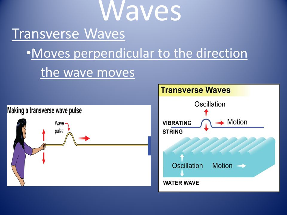 Transverse Waves Moves perpendicular to the direction the wave moves