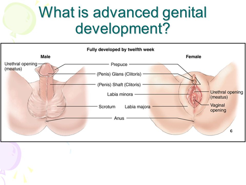 What is advanced genital development