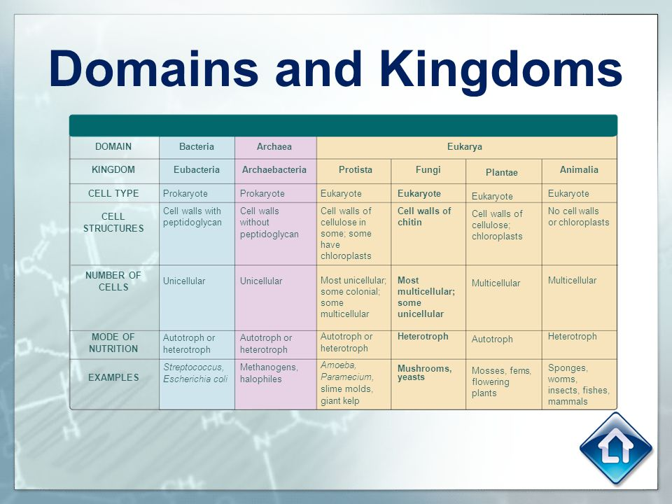 Domains and Kingdoms To the Teacher: DOMAIN KINGDOM CELL TYPE