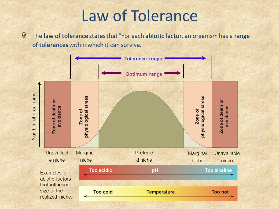 example of law of tolerance