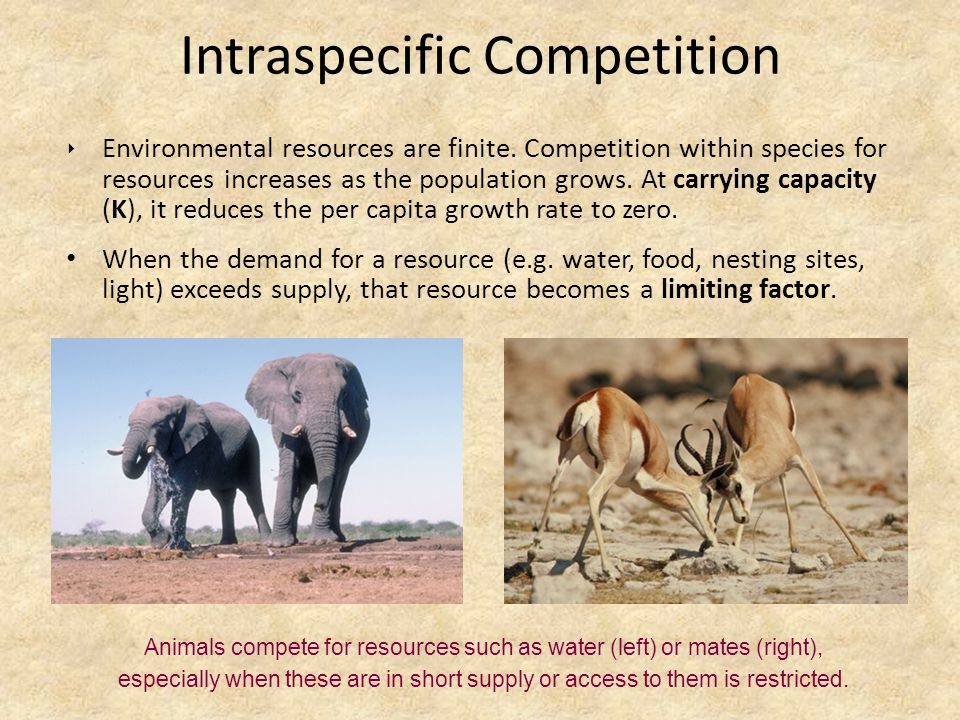 intraspecific interactions
