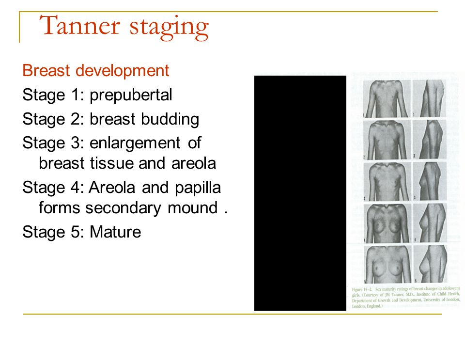 breast Tanners stages development of